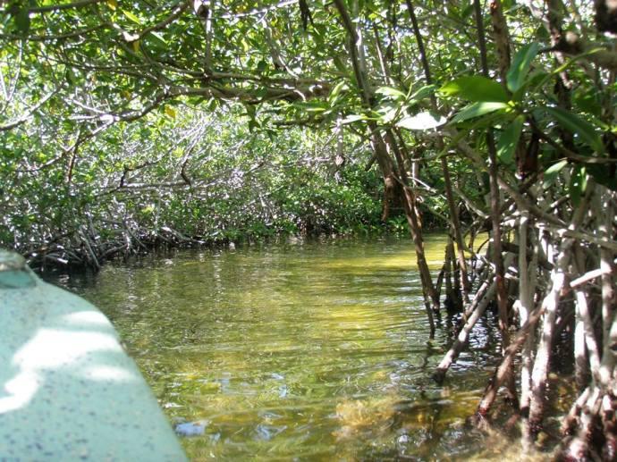 Mangrove Adventures