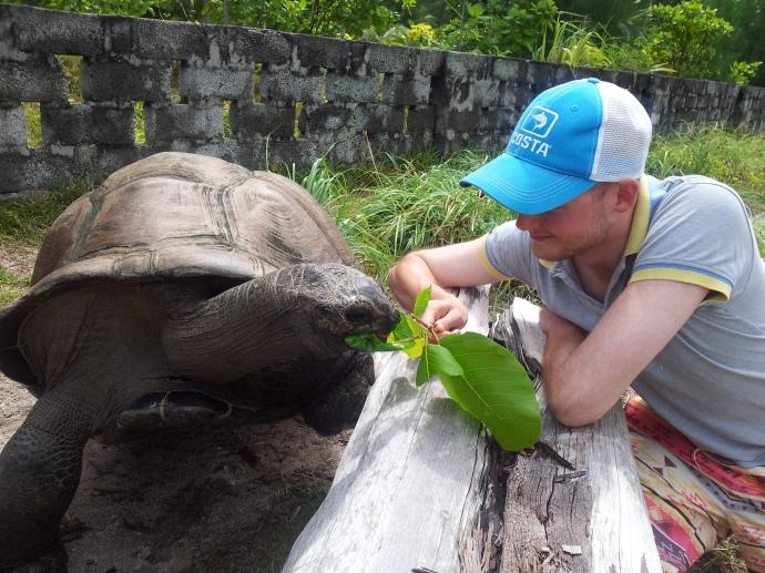 Giant Tortoises on Desroches