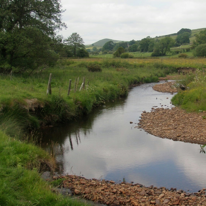 At its headwaters the Manifold is a tiny river but rich in insect life - and trout!