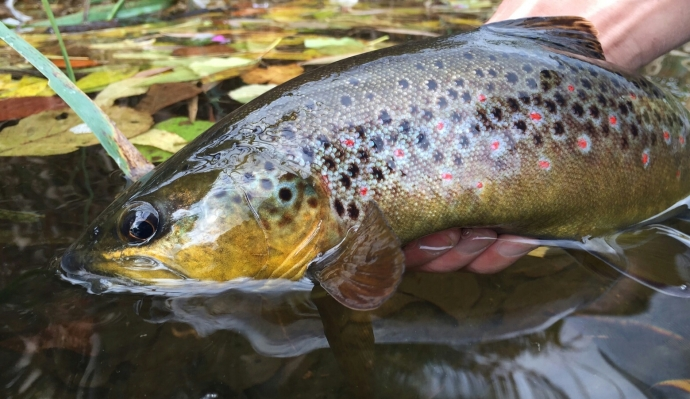 A thumping wild fish on the Dzigi but we wished they'd leave us alone
